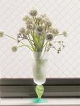 窓辺のシロツメ草